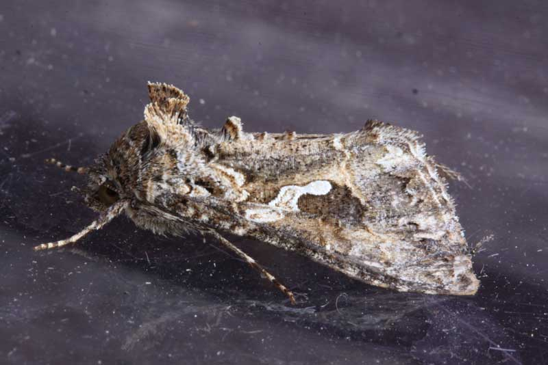Sussex Moth Group